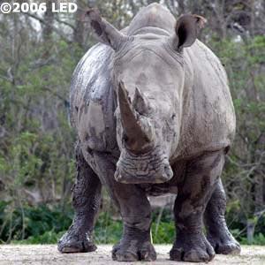 """Freakin Rhino. Say """"Eeugh."""""""